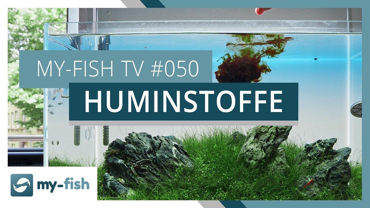 my-fish TV - Deine Nr. 1 Anlaufstelle für alle Themen rund um die Aquaristik 14