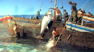 Video Can You Believe This Fishing? - BIG STINGRAYS MP3, 3GP, MP4, WEBM, AVI, FLV Mei 2019