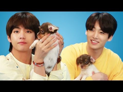 BTS Plays With Puppies While Answering Fan Questions_Celebek. Heti legjobbak