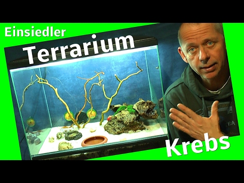 Neues Terrarium einrichten. Einsiedler Krebse ziehen um