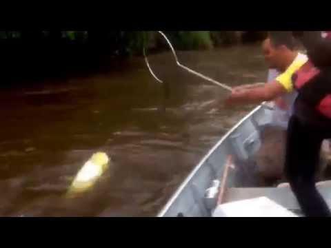 Duble de Dourado Gigante no Rio Dourados MS....Agende ja sua pescaria.
