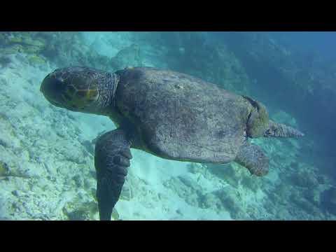 Molassas Reef Loggerhead
