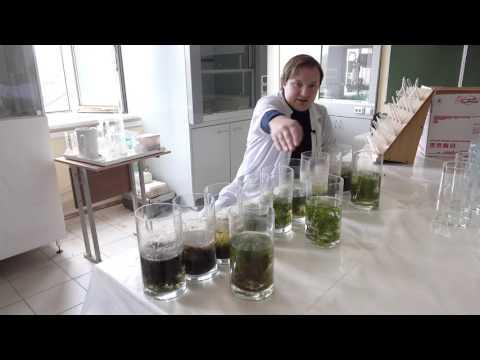 Изучение фитотоксичности органических ксенобиотиков при комплексном загрязнении ими водоемов.