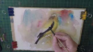 How to paint birds in watercolour