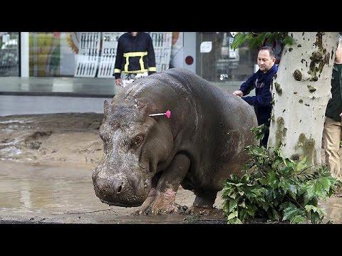 Γεωργία: Φονικές πλημμύρες και τρόμος από την απόδραση αγρίων ζώων