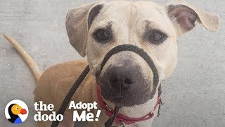 Dog Who Grew Up On A Chain Is Still A Puppy Inside A Big Dog's Body | The Dodo Adopt Me! by The Dodo
