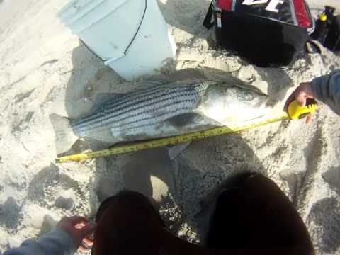 Nice 34″ Striped Bass – Long Beach Island, NJ 2012