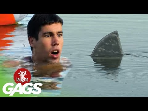 Shark Attack Prank