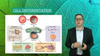 Essentials Concept Video - Gene Expression