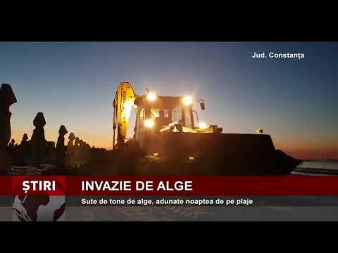 Invazie de alge marine, pe litoralul românesc