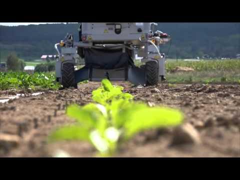 Tarım işçisi robotlar geliyor; Tarlada artık robotlar çalışacak