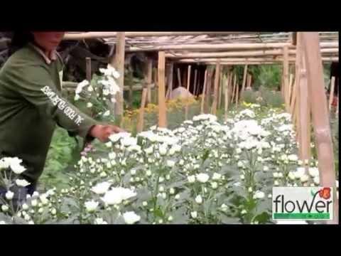 Flower Depot, Inc. - Philippines Flower Shop