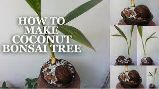 Video How To Make Coconut Bonsai Tree | Coconut Bonsai Growing Tips | How to Make Coco Bonsai | GREENPLANT MP3, 3GP, MP4, WEBM, AVI, FLV Oktober 2018