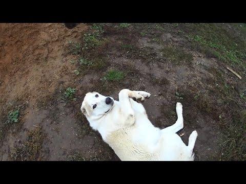 Любимые пакостники // Мое зверье // Жизнь в деревне (видео)