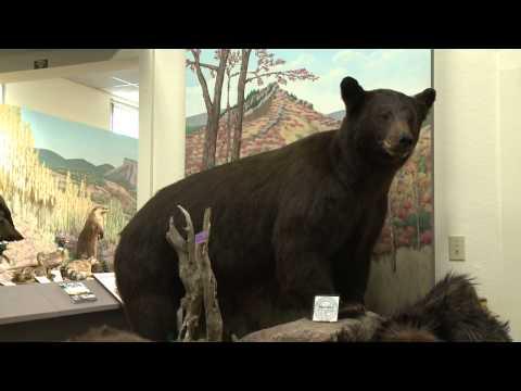 Durango's Wildlife Museum