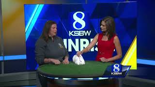 Pet of the Week: Caleb the Bunny