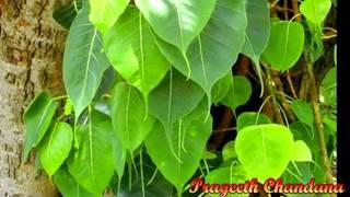 Music Video Sinhala Song   Peethupaadan Namamahan   Tempal Video   Prageeth Chandana