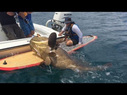 人、魚拉鋸戰!船長竟然在衝浪板上只靠著一根釣竿活捉186公斤巨型石斑魚!