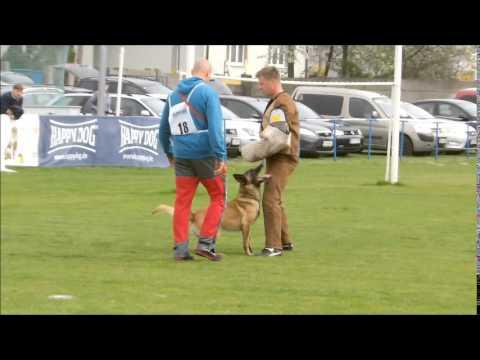 Fox von den schoenen Ecke & Pavol Šlahor  C-96 (видео)