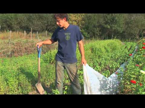 Vegetable Gardening : How to Protect Outdoor Plants From Frost