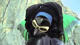 Le 1er vol d'un chien en wingsuit