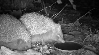Wildlife Trail Camera - 25.11.2016