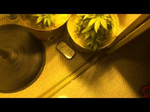 Tips & Information – Basics to Indoor Closet Marijuana Grow (Beginners)