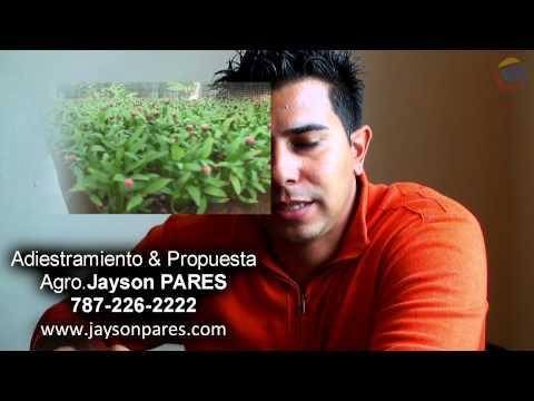 Hidroponia y su Viabilidad Ecomonica Puerto Rico