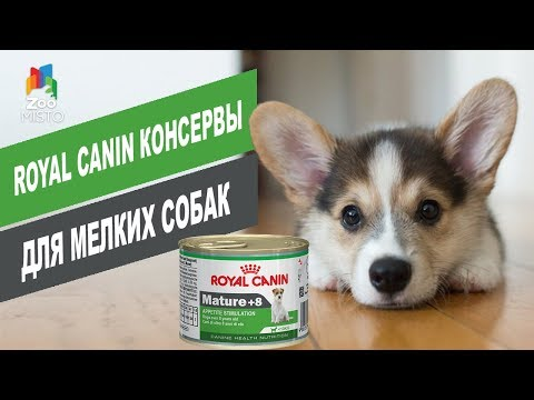 Royal Canin консервы для мелких собак