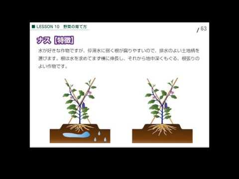 10-2 ナスの栽培について(Lesson10. 野菜の育て方)