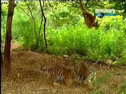 Tiger & Gibbon-very funny act