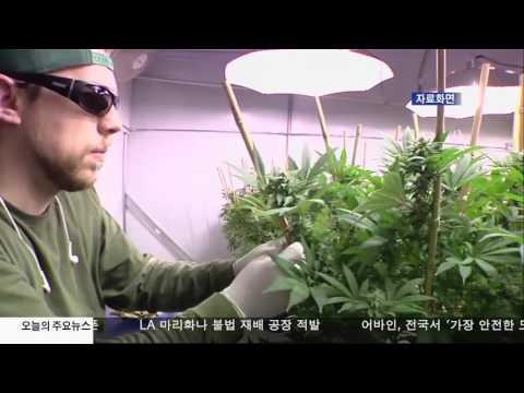 LA 마리화나 불법 재배 적발  9.29.16 KBS America News
