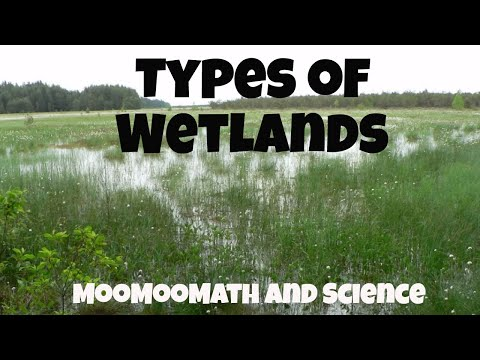 Types Of Ecosystems-Wetlands-Marshes,Swamps,Bogs, And Fens