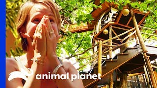 This Insane Hawaiian Treehouse Has A 60ft High Crows Nest! | Treehouse Masters by Animal Planet
