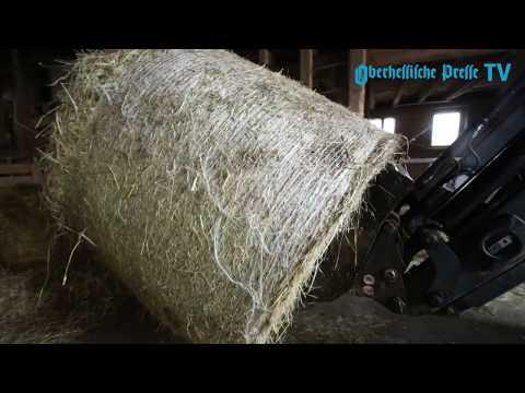 Ein Leben auf dem Ponyhof: Pferdehof Lemmer in Großseelheim