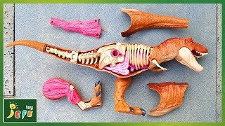 Video Giant Dinosaur Jurassic World Tyrannosaurus Rex Anatomy. Find and assemble the pieces!ㅣJefeToy MP3, 3GP, MP4, WEBM, AVI, FLV Mei 2019