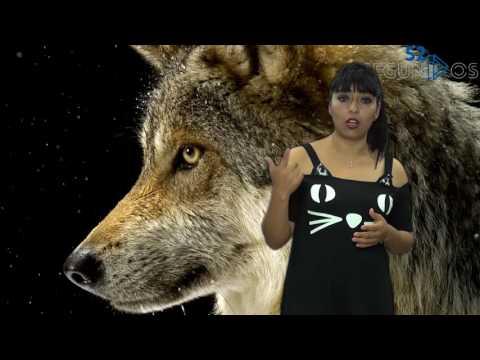 #52segundos - especies en peligro de extinción por muro de Trump