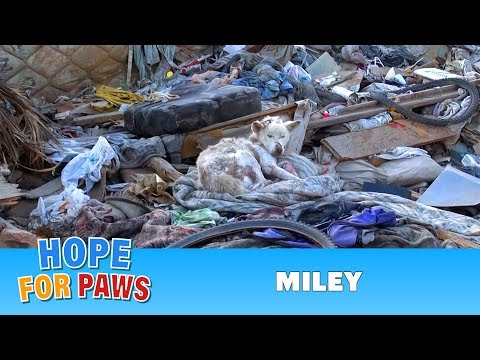 questo cane viveva in una discarica, guardate cosa succede dopo.