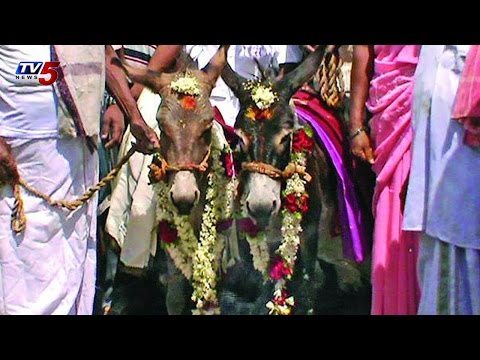 Villagers Perform Wedding of Donkeys  in Medak : TV5 News