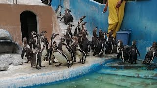 Months After Aquarium Shut Down For Good, Officials Uncover A Chilling Scene Within by Did You Know Animals?