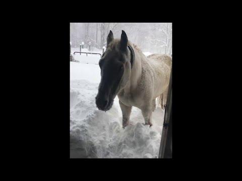 Nyt on pienelle ponille ihan liikaa lunta