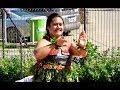 Tau 39 Olunga   39 Otulangi  39 O Lapaha  Tonga National Centre 30th Anniversary Celebration