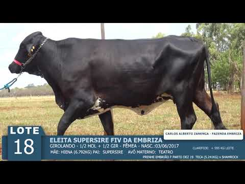 LOTE 18 - ELEITA SUPERSIRE FIV -