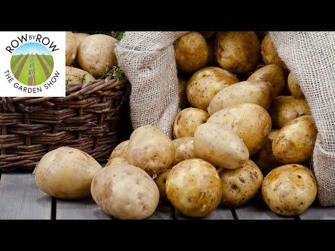 THE ULTIMATE POTATO GROWING GUIDE -- TIPS & TRICKS
