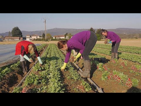 Covid-19: Τα προβλήματα που αντιμετωπίζουν οι αγρότες