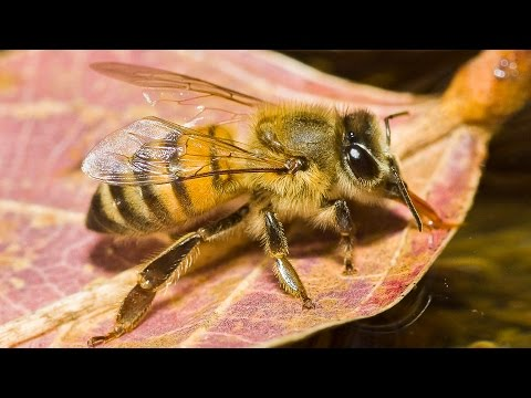 Top 10 Most Deadliest Insects on Earth
