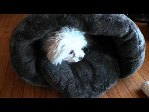 PLS Pet Cuddle Pouch Pet Bed, Bag, Warmer Cave available on Amazon