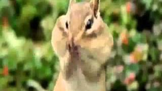 Video Funny Animals with voice over.. MP3, 3GP, MP4, WEBM, AVI, FLV Juni 2018