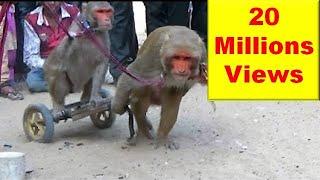 Video बन्दर बंदरिया के कारनामे: मदारी  का खेल Comedy Drama Show Of Funny Indian Monkey , Madari On Street MP3, 3GP, MP4, WEBM, AVI, FLV Maret 2018