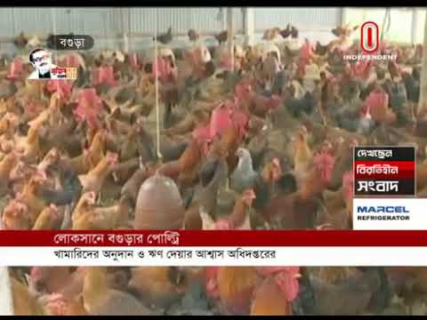 Bogra poultry farmers are at a loss (07-08-20) Courtesy:IndependentTV